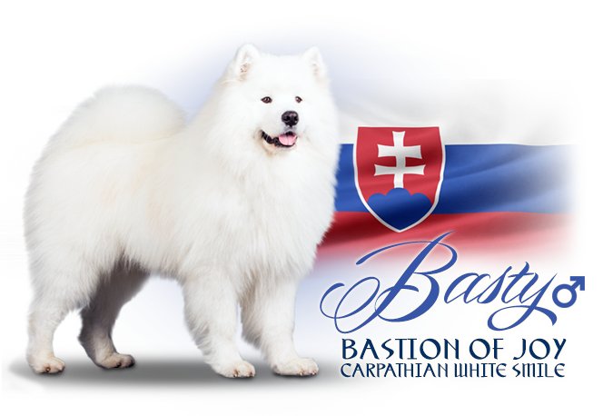 Samoyed Bastion of Joy Carpathian White Smile