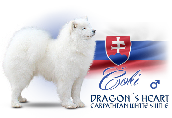 Samoyed Dragon´s Heart  Carpathian white smile