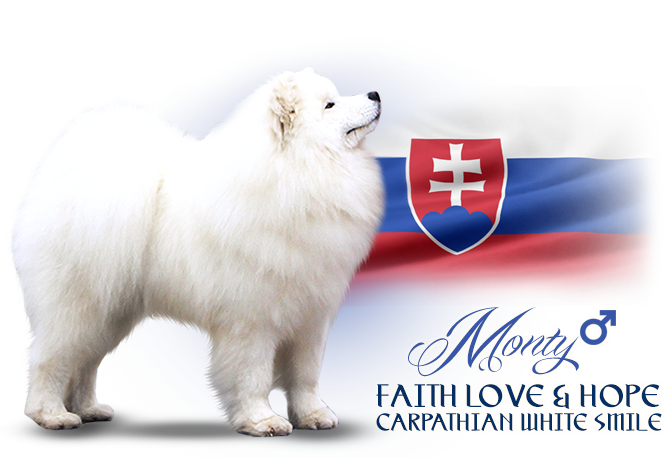 Samoyed Faith Love and Hope Carpathian white smile