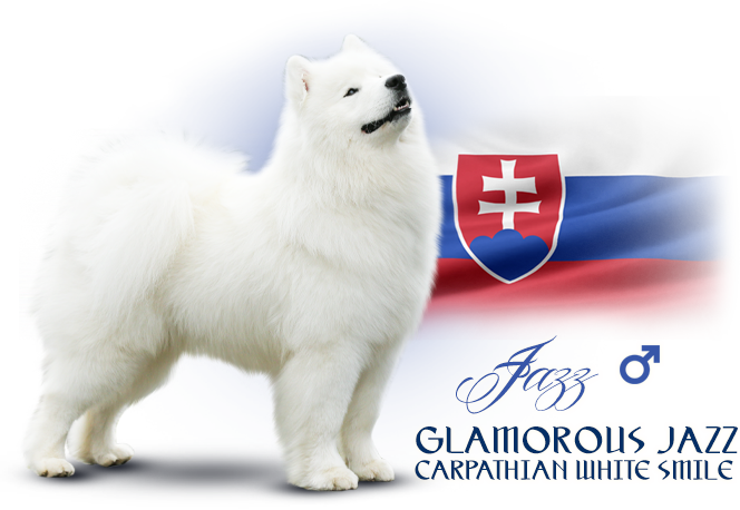 Samoyed Glamorous Jazz Carpathian white smile