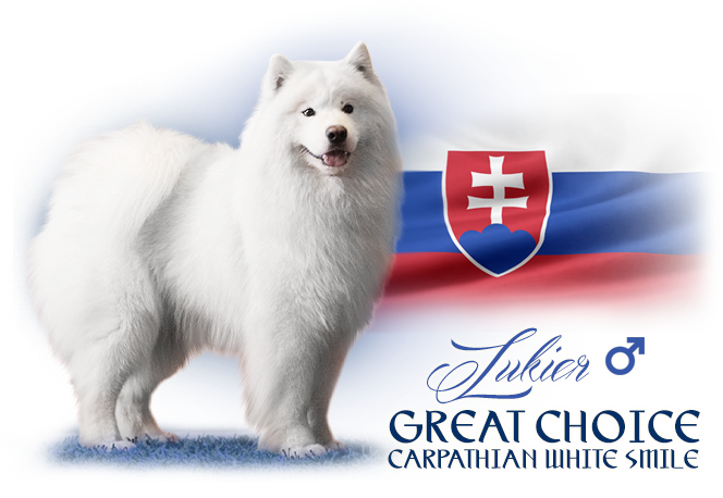 Samoyed Great Choice Carpathian white smile